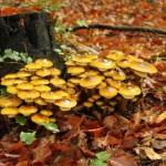 (Lude) gljive