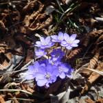 2014-03-15-plitvice-flora-01