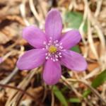 2014-03-15-plitvice-flora-04