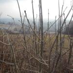 2015-03-14-Belecgrad-22
